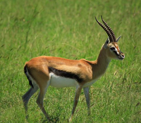 Gazelle Index: Q1 2012 Outlook